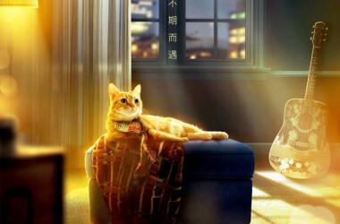 流浪猫鲍勃剧照