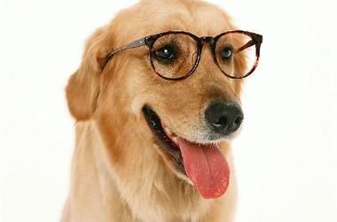 内有爱犬剧照